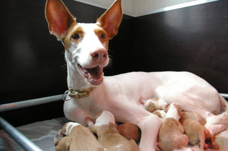 Smitthy and her pups ( 2011 )